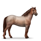 Quarter Pony Strawberry Roan