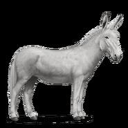 White Donkey Howrse