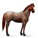 Quarter Horse.Strawberry Roan.Altes Design
