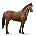 Quarter Horse.Brauner.Altes Design