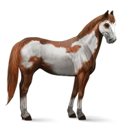 Paint Horse Overo-Fuchsschecke Altes Design
