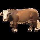 Braford Kuh