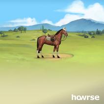 Horse-77338271
