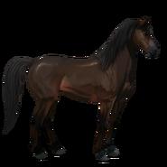 Mustang Dunkelbrauner Alt