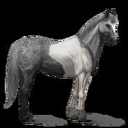 Paint Horse Apfelschimmel mit Tobiano-Scheckung Altes Design