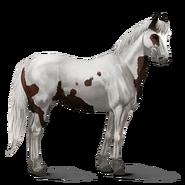 Paint Horse Dunkelfuchs mit Tovero-Scheckung Altes Design