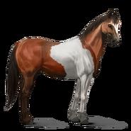 Paint Horse Rotbrauner mit Tobiano-Scheckung Altes Design