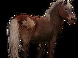 Sable Island Pony