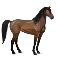 Mustang Brauner Alt