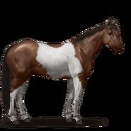 Paint Horse Dunkelfuchs mit Tobiano-Scheckung
