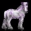 Greyfell 3 Fohlen