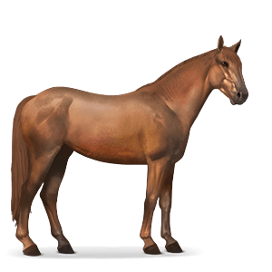 Mustang Fuchs