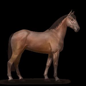 Amerikanischer Traber Pferd Brauner