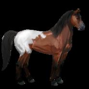 Mustang Schabrackenrotbrauner Alt
