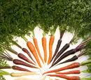 Karotten frisch aufbewahren