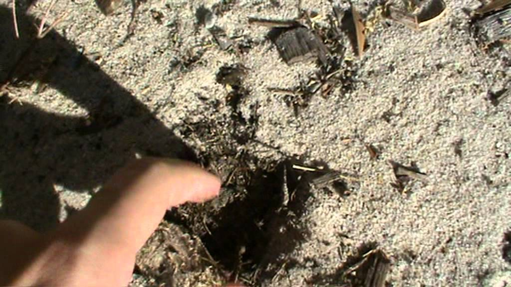 How To Dig a Hole with your Finger   HowToBasic Wiki ...