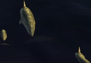 Narwhal 2