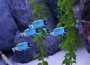 SOD-ShipGraveyard-BlueFish3