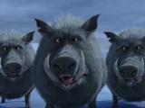 Wild Boar (Franchise)