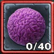 RoB-Brain Coral