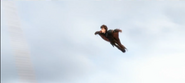 Wingsuit2