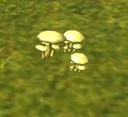 SOD-GoingBerserker-Mushroom3