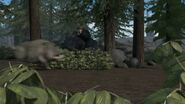Wild Boar 78