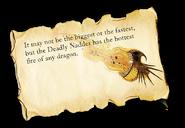Dragons bod nadder info-1-
