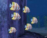 SOD-ShipGraveyard-StripedFish1