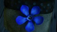 Blue Oleander 22