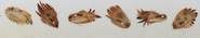 Toothless Head Design