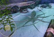 SOD-ShipGraveyard-Octopus1