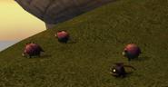 Hobgobblers with Hobgobbler Sheep 4