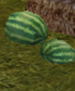 SOD-Watermelons