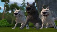 TH - The wolves ready to attack Leyla and Dak
