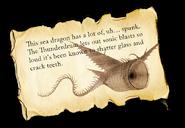 Dragons bod thunder info-1-