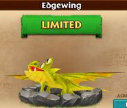 ROB-EdgewingBaby