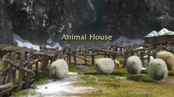 Animal House title card