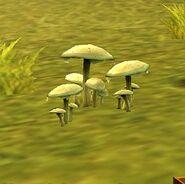 SOD-GoingBerserker-Mushroom1