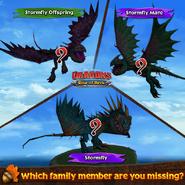 ROB-Stormfly Family Ad