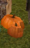 SOD-Pumpkins