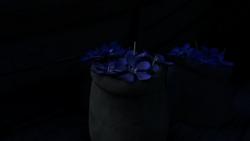 Blue Oleander 19