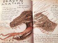 SeadragonusGiganticusMaximus1