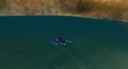 Muddie Swimming Back 1