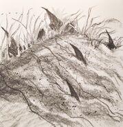 Sandshark1