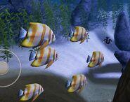 SOD-ShipGraveyard-StripedFish2
