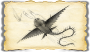 Dragons BOD Thunder Gallery Image 01
