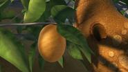 NoDragonLeftBehind-Fruit