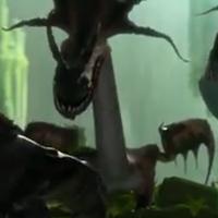 Dragon 9.1