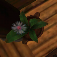 Flower in SoD 3